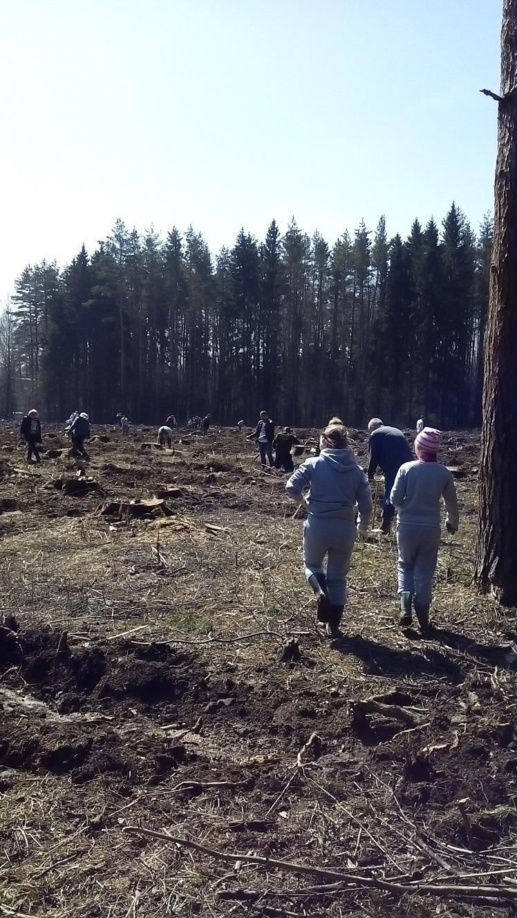 экологическая акция лес победы_1