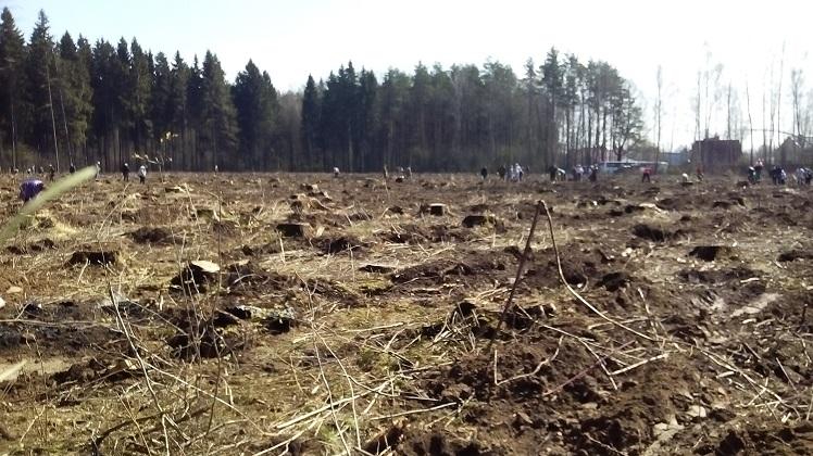 экологическая акция лес победы_2