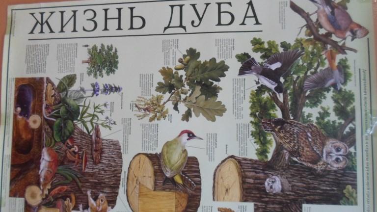 Прилетели птицы_Красная Поляна (26)