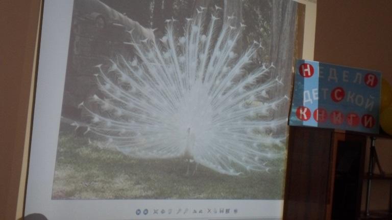 Международный день птиц_Красная Поляна (4)