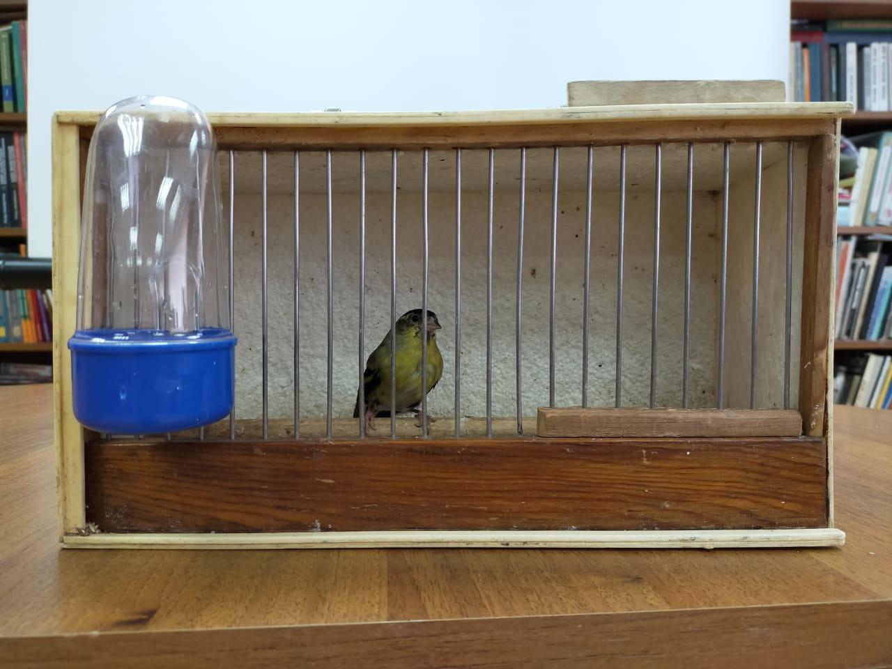 Птицы наших лесов -  Встреча с орнитологом-любителем-4