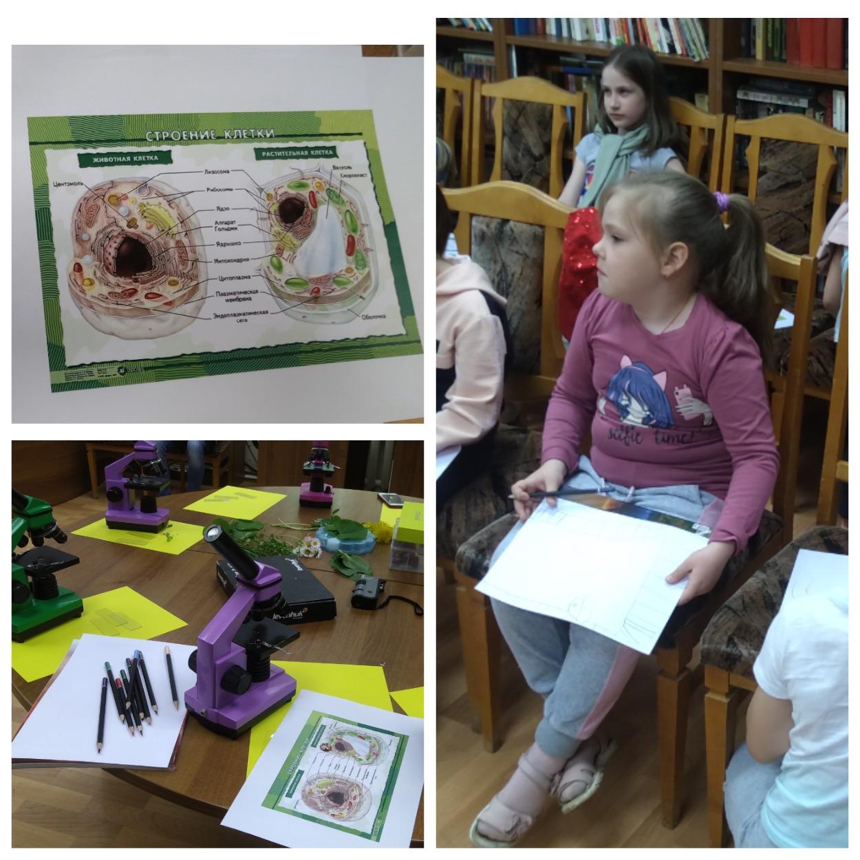 Строение клетки - Детский научный клуб (ДНК)-5
